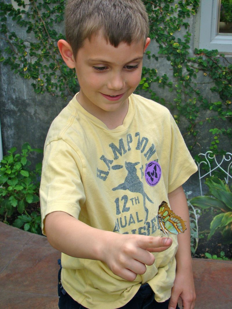 Eli holding butterfly