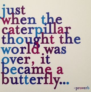 Caterpillar became a butterfly