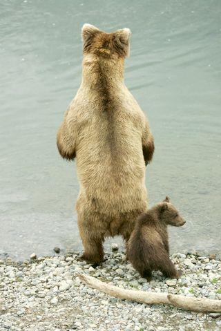 Mama Bear photo