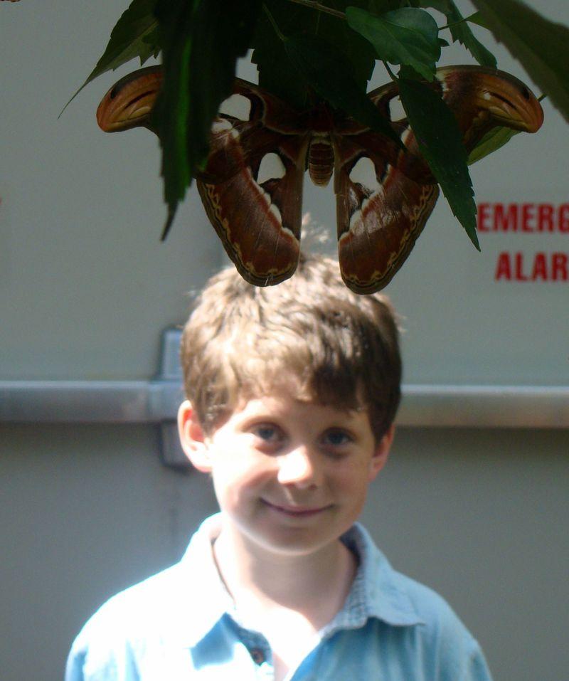 Hugo w massive butterfly