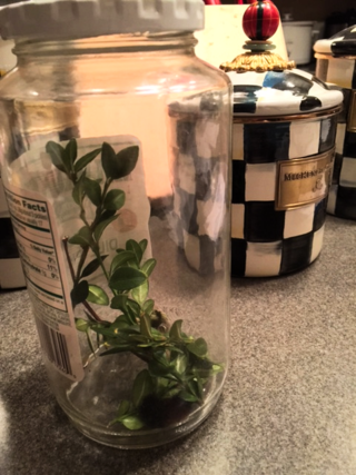 Caterpillar in jar