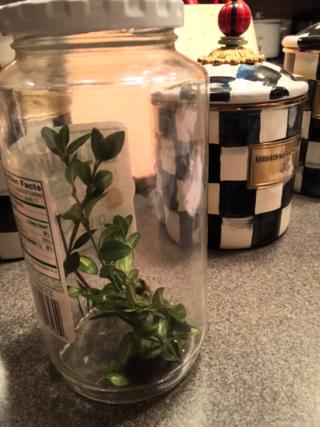Caterpillar in jar